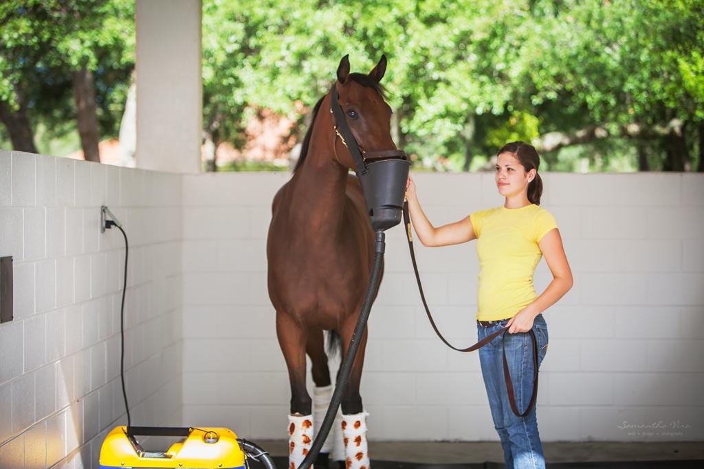Equine Respirator